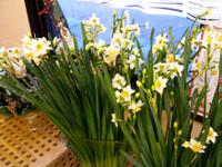 20091227_flower