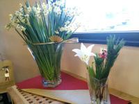 20100110_flower
