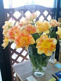 20100207_flower