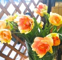 20100221_flower