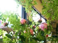 20110703_photo